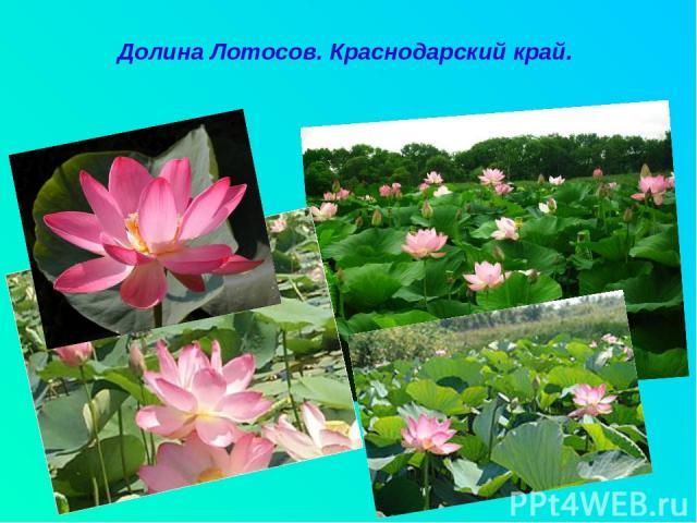 Долина Лотосов. Краснодарский край.