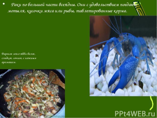 Раки по большей части всеядны. Они с удовольствием поедают мотыля, кусочки мяса или рыбы, таблетированные корма. Вареное мясо ябби белое, сладкое, сочное, с нежным ароматом.