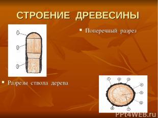 СТРОЕНИЕ ДРЕВЕСИНЫ Разрезы ствола дерева Поперечный разрез
