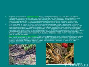 Встретить внаших лесах ядовитую змею проще, чем бурого медведя или лося. Змеи п