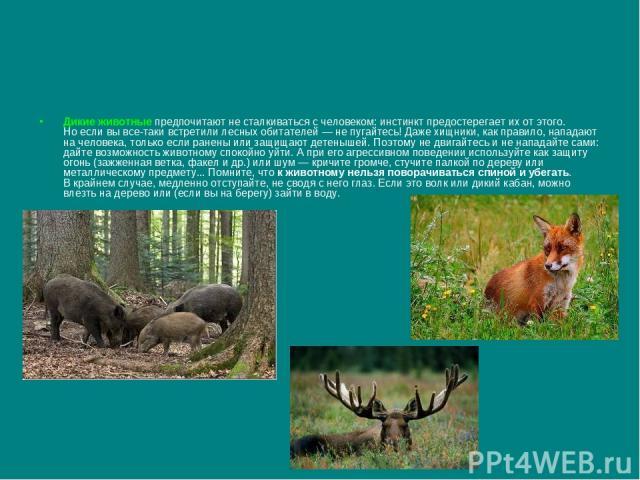 Дикие животные предпочитают несталкиваться счеловеком: инстинкт предостерегает ихотэтого. Ноесли вывсе-таки встретили лесных обитателей— непугайтесь! Даже хищники, как правило, нападают начеловека, только если ранены или защищают детенышей.…