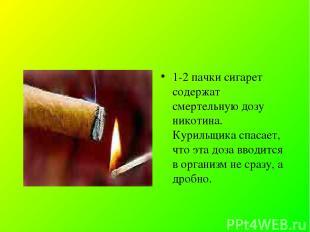 1-2 пачки сигарет содержат смертельную дозу никотина. Курильщика спасает, что эт