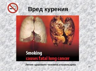 * Вред курения Легкие здорового человека и курильщика