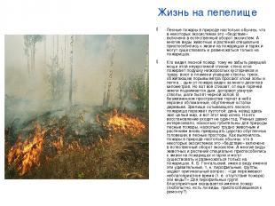 Жизнь на пепелище Лесные пожары в природе настолько обычны, что в некоторых экос