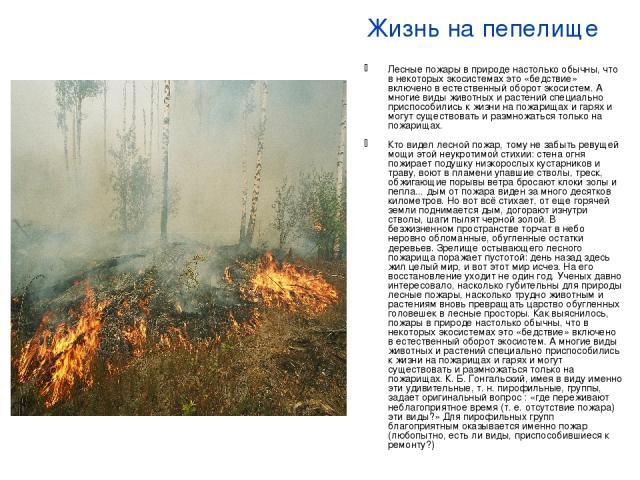 Жизнь на пепелище Лесные пожары в природе настолько обычны, что в некоторых экосистемах это «бедствие» включено в естественный оборот экосистем. А многие виды животных и растений специально приспособились к жизни на пожарищах и гарях и могут существ…