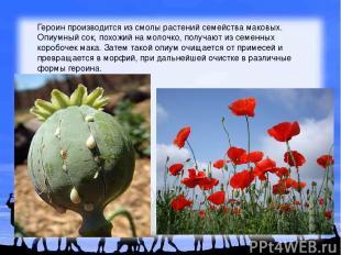 Героин производится из смолы растений семейства маковых. Опиумный сок, похожий н