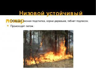 Низовой устойчивый пожар Обгорает лесная подстилка, корни деревьев, гибнет подле