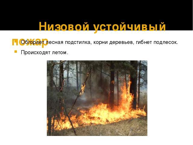 Низовой устойчивый пожар Обгорает лесная подстилка, корни деревьев, гибнет подлесок. Происходят летом.