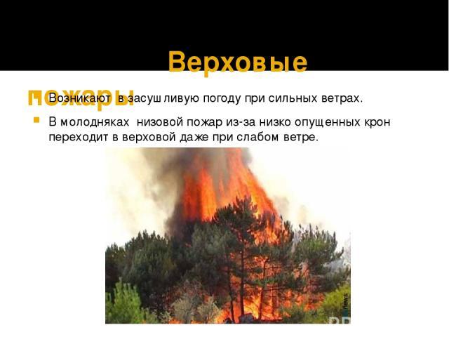 Верховые пожары Возникают в засушливую погоду при сильных ветрах. В молодняках низовой пожар из-за низко опущенных крон переходит в верховой даже при слабом ветре.