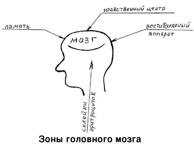 Зоны головного мозга