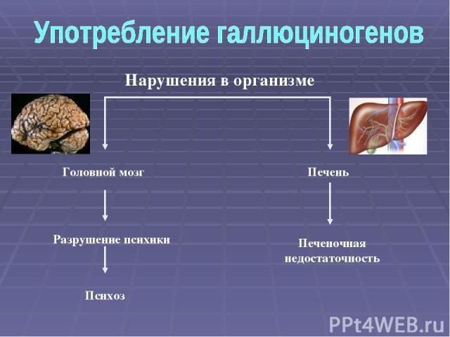 Головной мозг Психоз Печень Печеночная недостаточность Разрушение психики Нарушения в организме