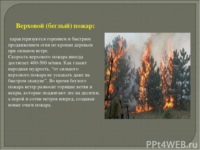 """Верховой (беглый) пожар: характеризуются горением и быстрым продвижением огня по кронам деревьев при сильном ветре. Скорость верхового пожара иногда достигает 400-500 м/мин. Как гласит народная мудрость, """"от сильного верхового пожара не ускакать даж…"""