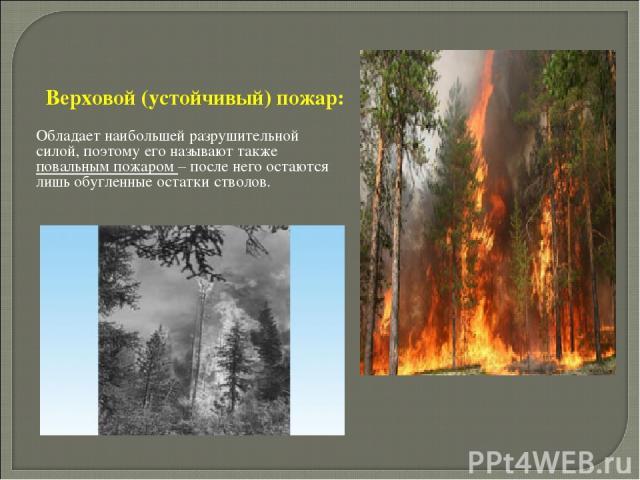 Верховой (устойчивый) пожар: Обладает наибольшей разрушительной силой, поэтому его называют также повальным пожаром – после него остаются лишь обугленные остатки стволов.