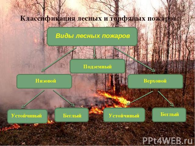 Подземный Классификация лесных и торфяных пожаров: Виды лесных пожаров Низовой Верховой Устойчивый Беглый Устойчивый Беглый