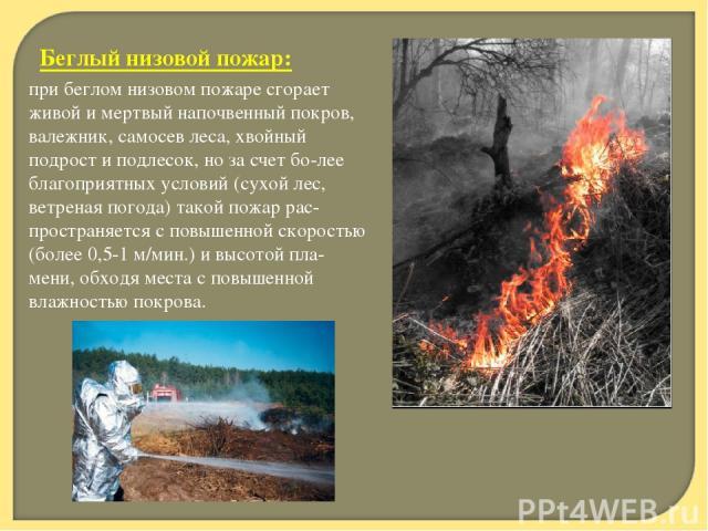 Беглый низовой пожар: при беглом низовом пожаре сгорает живой и мертвый напочвенный покров, валежник, самосев леса, хвойный подрост и подлесок, но за счет бо лее благоприятных условий (сухой лес, ветреная погода) такой пожар рас пространяется с повы…