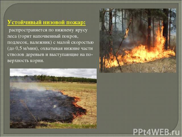 . Устойчивый низовой пожар: распространяется по нижнему ярусу леса (горит напочвенный покров, подлесок, валежник) с малой скоростью (до 0,5 м/мин), охватывая нижние части стволов деревьев и выступающие на по верхность корни.