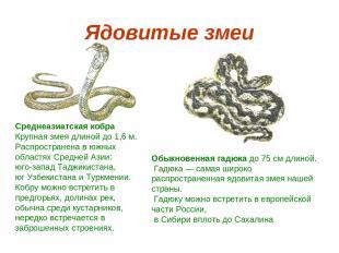 Ядовитые змеи Среднеазиатская кобра Крупная змея длиной до 1,6 м. Распространена