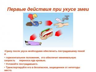 Первые действия при укусе змеи Сразу после укуса необходимо обеспечить пострадав