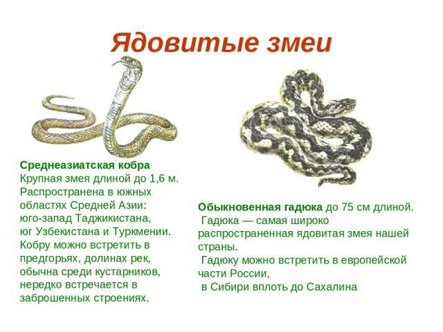 Ядовитые змеи Среднеазиатская кобра Крупная змея длиной до 1,6 м. Распространена в южных областях Средней Азии: юго-запад Таджикистана, юг Узбекистана и Туркмении. Кобру можно встретить в предгорьях, долинах рек, обычна среди кустарников, нередко вс…