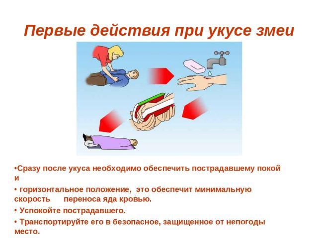 Первые действия при укусе змеи Сразу после укуса необходимо обеспечить пострадавшему покой и горизонтальное положение, это обеспечит минимальную скорость переноса яда кровью. Успокойте пострадавшего. Транспортируйте его в безопасное, защищенное от н…
