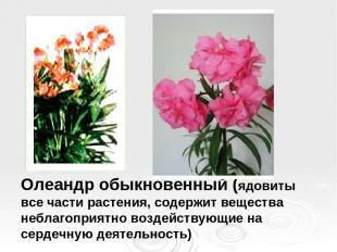 Олеандр обыкновенный (ядовиты все части растения, содержит вещества неблагоприят