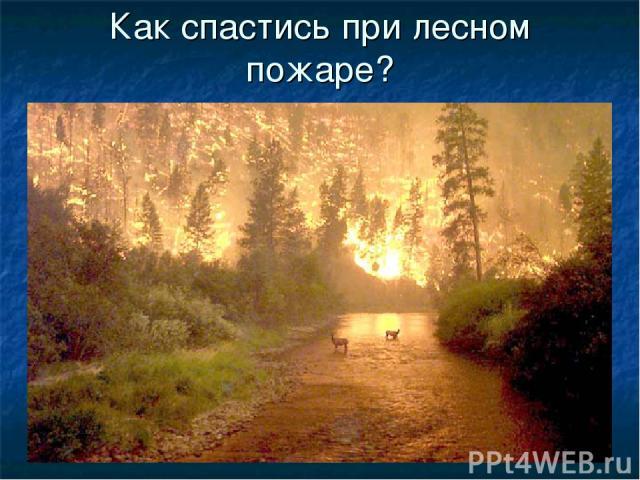 Как спастись при лесном пожаре?