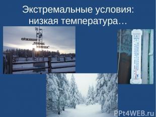 Экстремальные условия: низкая температура…