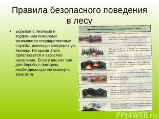Правила безопасного поведения в лесу Борьбой с лесными и торфяными пожарами зани