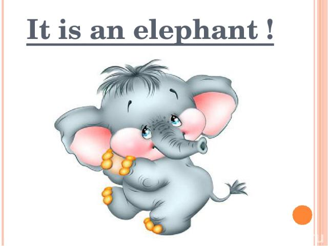 It is an elephant !