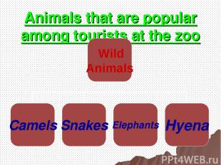 Animals that are popular among tourists at the zoo