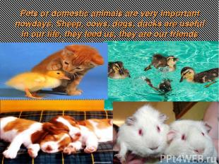 Pets or domestic animals are very important nowdays. Sheep, cows, dogs, ducks ar