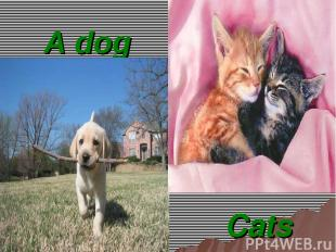 A dog Cats