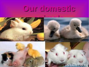 Our domestic animals