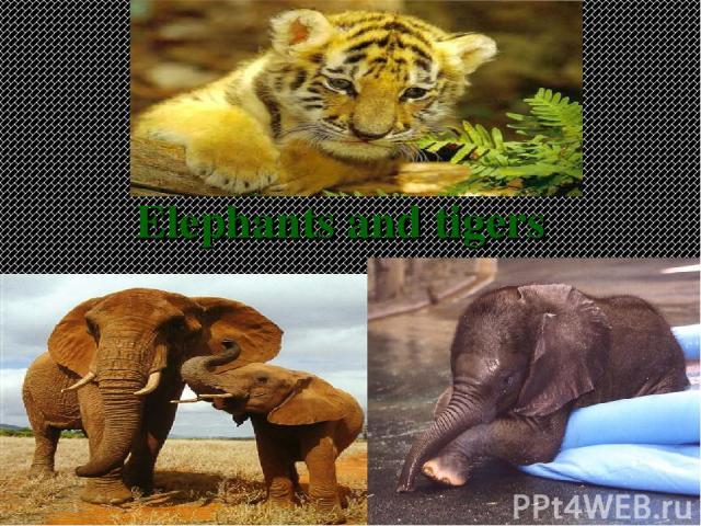 Elephants and tigers