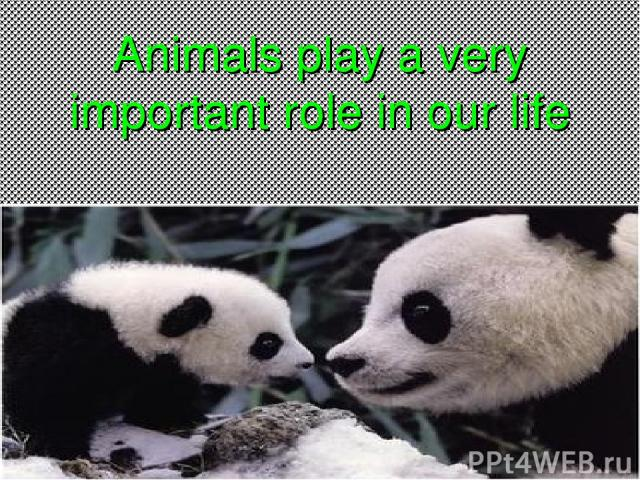 Animals play a very important role in our life