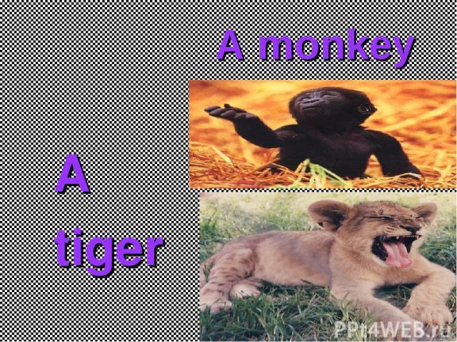 A monkey A tiger