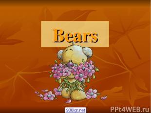 Bears 900igr.net