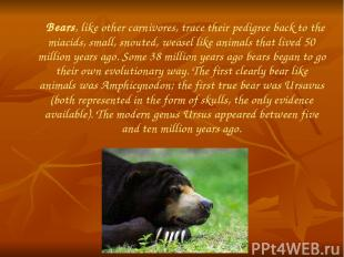 Bears, like other carnivores, trace their pedigree back to the miacids, small, s