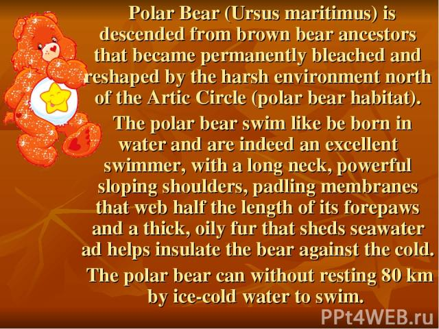 Polar Bear (Ursus maritimus) is descended from brown bear ancestors that became permanently bleached and reshaped by the harsh environment north of the Artic Circle (polar bear habitat). The polar bear swim like be born in water and are indeed an ex…