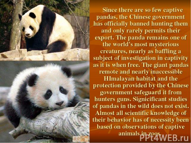 Since there are so few captive pandas, the Chinese government has officially banned hunting them and only rarely permits their export. The panda remains one of the world's most mysterious creatures, nearly as baffling a subject of investigation in c…