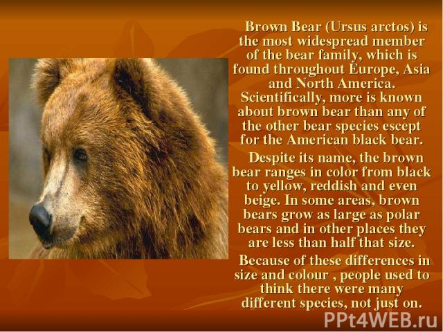Brown Bear (Ursus arctos) is the most widespread member of the bear family, which is found throughout Europe, Asia and North America. Scientifically, more is known about brown bear than any of the other bear species escept for the American black bea…
