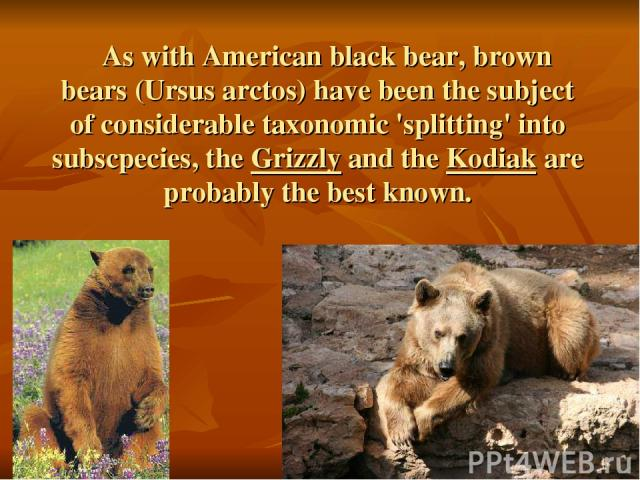 As with American black bear, brown bears (Ursus arctos) have been the subject of considerable taxonomic 'splitting' into subscpecies, the Grizzly and the Kodiak are probably the best known.