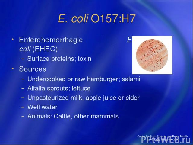 Center for Food Security and Public Health Iowa State University 2004 E. coli O157:H7 Enterohemorrhagic Escherichia coli (EHEC) Surface proteins; toxin Sources Undercooked or raw hamburger; salami Alfalfa sprouts; lettuce Unpasteurized milk, apple j…
