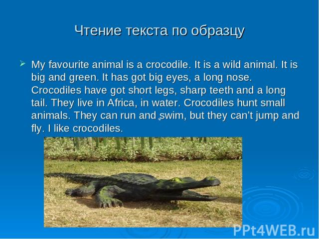 Чтение текста по образцу My favourite animal is a crocodile. It is a wild animal. It is big and green. It has got big eyes, a long nose. Crocodiles have got short legs, sharp teeth and a long tail. They live in Africa, in water. Crocodiles hunt smal…