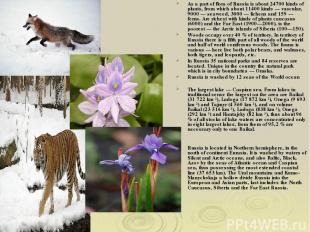 As a part of flora of Russia is about 24700 kinds of plants, from which about 11