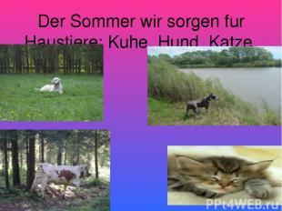 Der Sommer wir sorgen fur Haustiere: Kuhe, Hund. Katze.