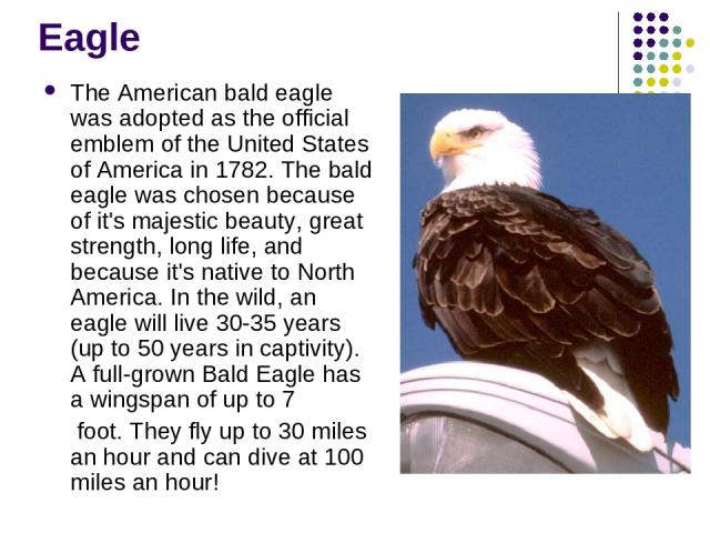 Eagle The American bald eagle was adopted as the official emblem of the United States of America in 1782. The bald eagle was chosen because of it's majestic beauty, great strength, long life, and because it's native to North America. In the wild, an…