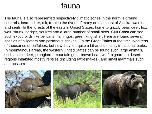 fauna The fauna is also represented respectively climatic zones in the north is ground squirrels, bears, deer, elk, trout in the rivers of many on the coast of Alaska, walruses and seals. In the forests of the eastern United States, home to grizzly …