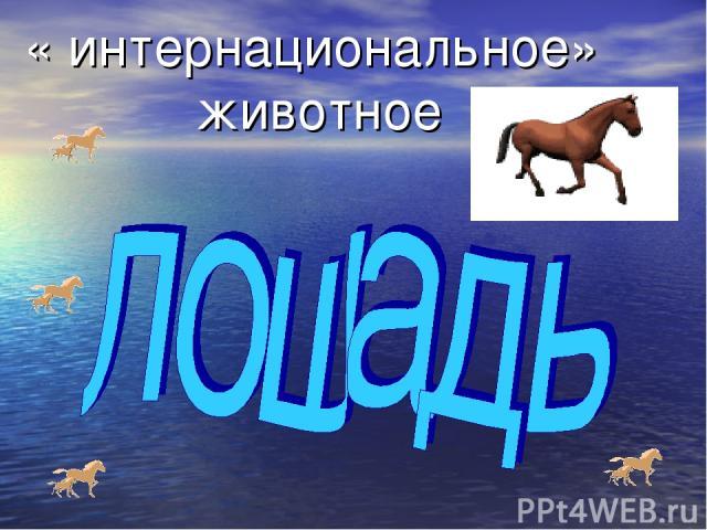 « интернациональное» животное