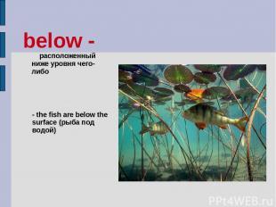 below - расположенный ниже уровня чего-либо - the fish are below the surface (ры